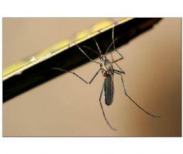 家庭如何灭蚊子
