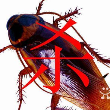 武汉家庭灭蟑螂