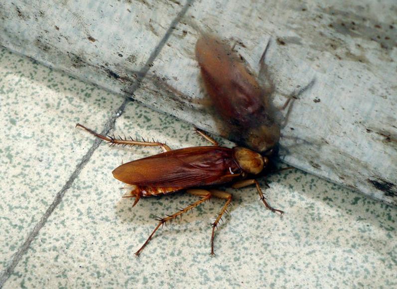 武汉灭蟑螂公司