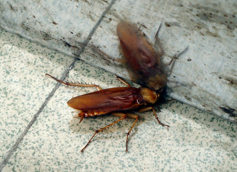 武汉灭蟑螂