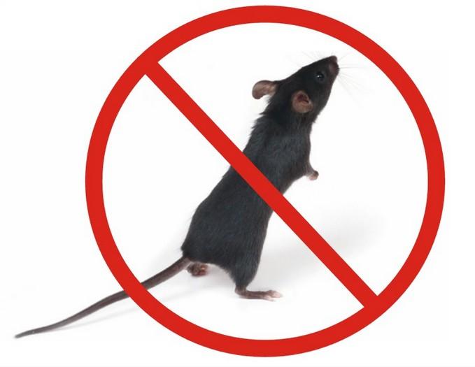 武汉家中灭鼠