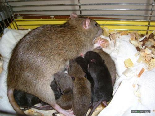 武汉酒店灭鼠
