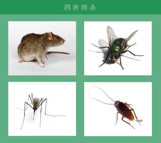 武汉灭鼠杀虫公司