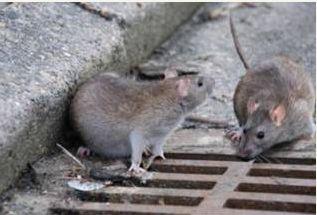 武汉餐厅灭鼠
