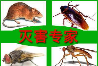武汉专业杀虫灭鼠公司