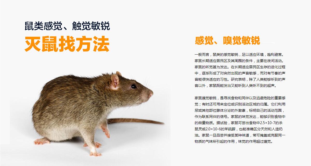 武汉超市灭鼠