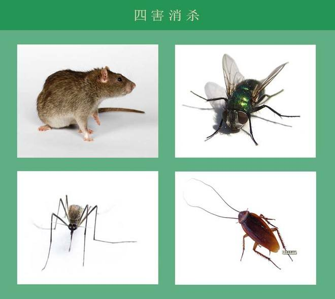 武汉办公室灭鼠