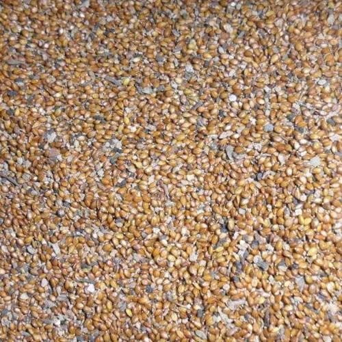 【专家】黄石药材种子在哪买,中生中药,各种药材种子的价格