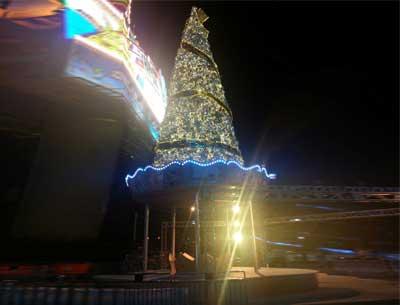 大型圣诞树订购