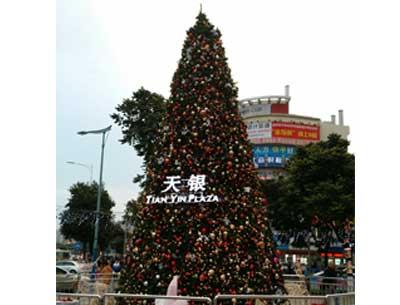 很高的圣诞树