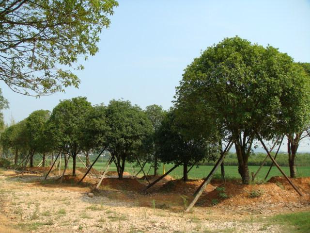 苗木种植基地