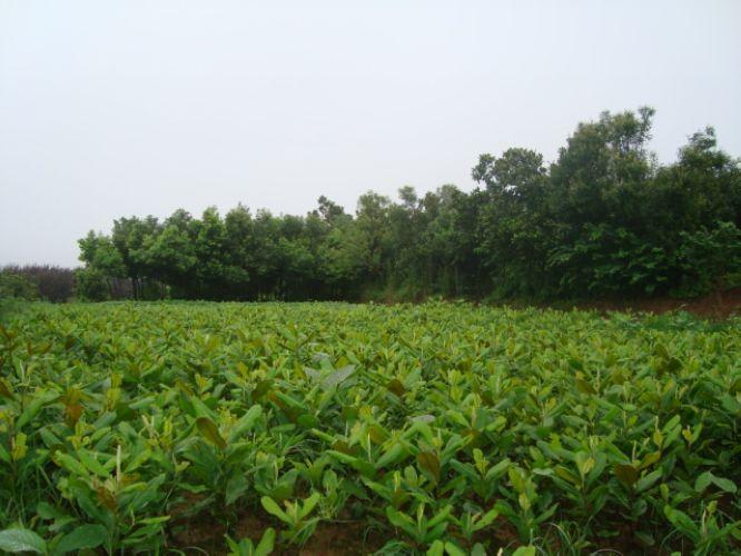 河南苗木的品种特色有哪些