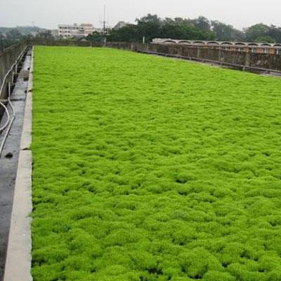 石家庄屋顶绿化