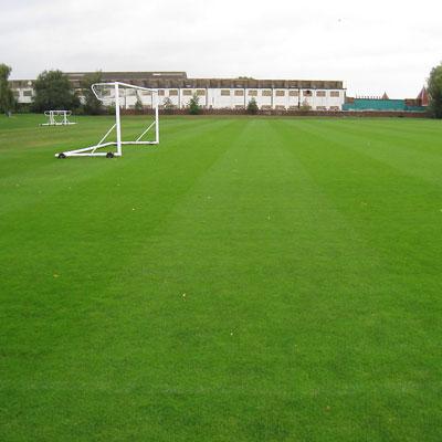 石家庄足球场天然草坪