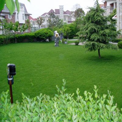 石家庄草坪绿化