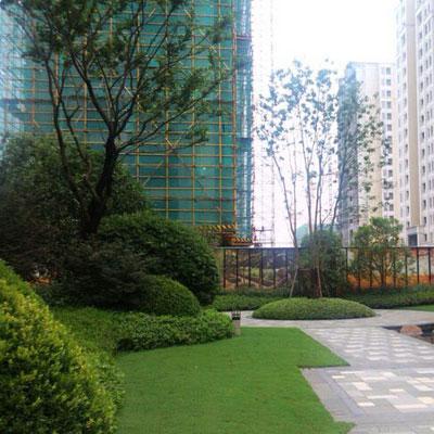 石家庄小区绿化草坪