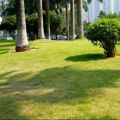 河北景观草坪