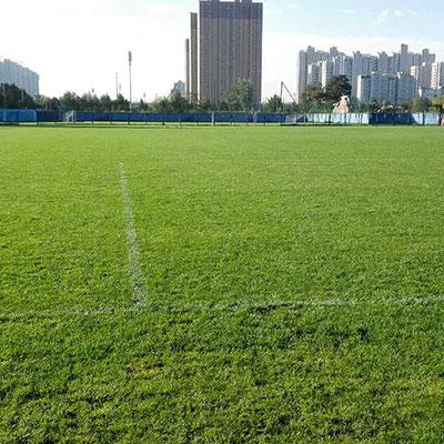 石家庄草坪