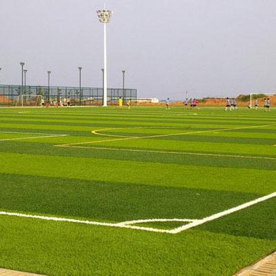 石家庄足球场草皮
