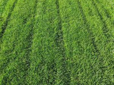 石家庄草坪施工