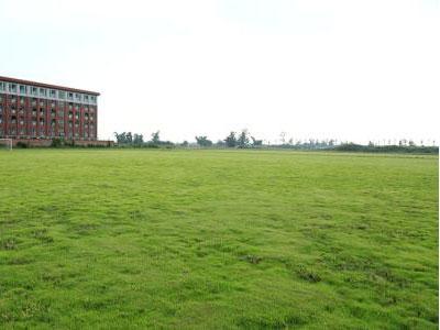 河北草坪施工