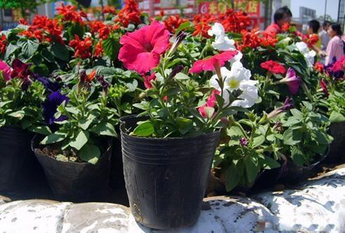 花卉专用营养钵