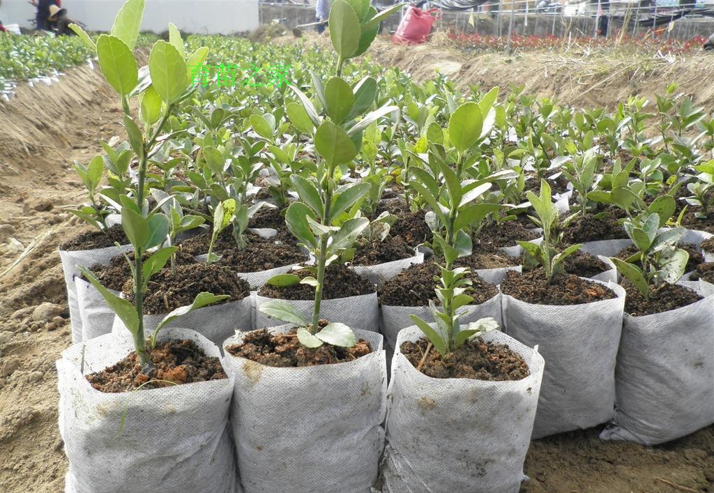 透气植树袋