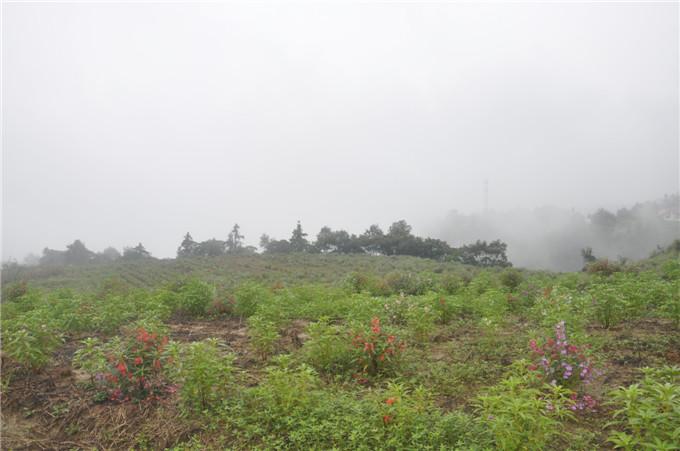 四川中药材种植规划