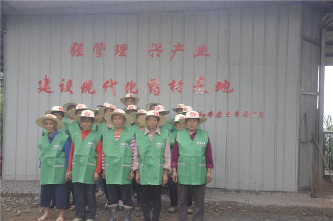 重庆中药材种植项目