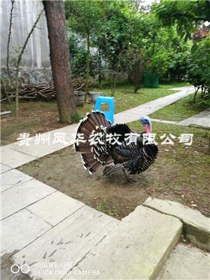 貴州火雞養殖