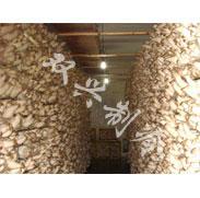 食用菌冷库
