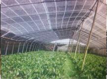 【图文】蔬菜大棚网作用有哪些 蔬菜大棚网辨别好坏的办法