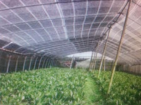 大棚专用遮阳网