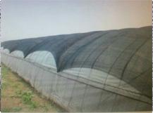 农用遮阳网蔬菜大棚网与季节的关系 蔬菜大棚网辨别好坏的办法