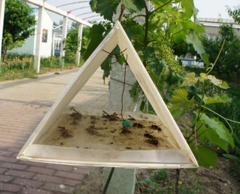 玉米螟三角形诱捕器