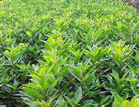 【知识】恩施园林绿化养护措施4大要点 恩施园林景观居住小区植物如何选择