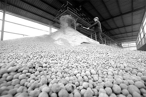 贵州磷石膏公司