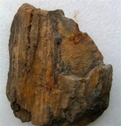 郑州树化石商家