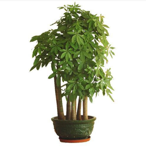 重庆大型植物租赁