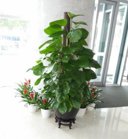 九龙坡区植物租赁