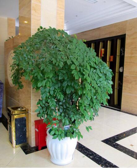 巴南区植物租赁