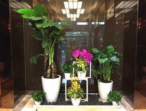 重庆写字楼植物租赁