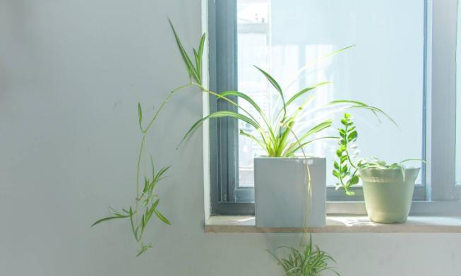植物租赁报价
