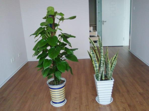 植物租赁重庆