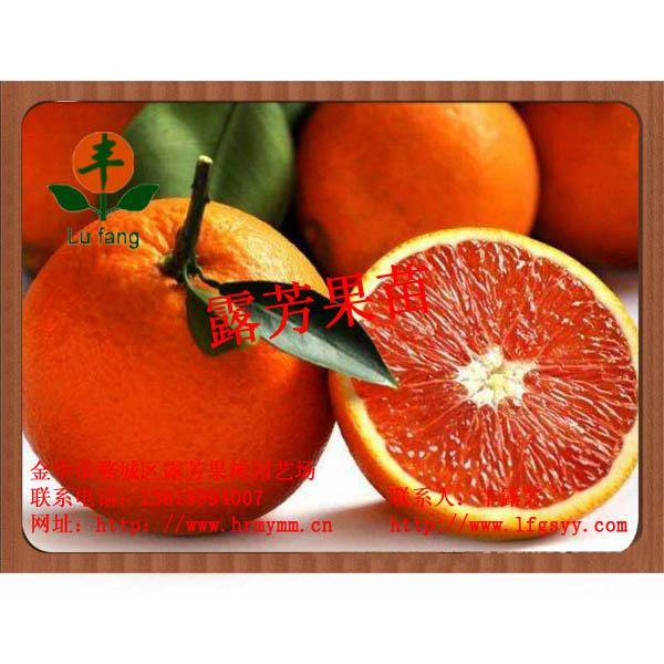 8号血橙脱毒苗