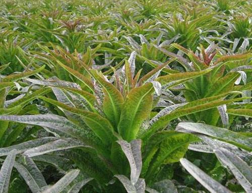湖北瑞禾牌蔬菜有机肥