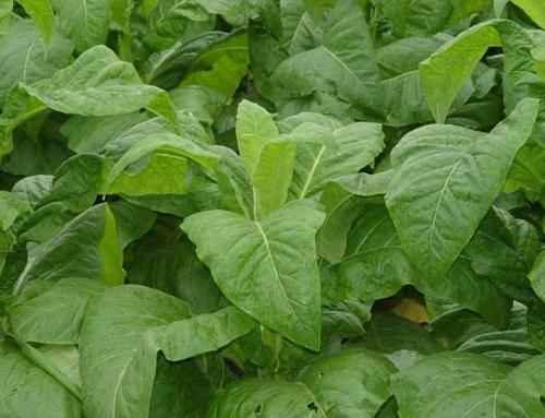 湖北烟草有机肥厂家