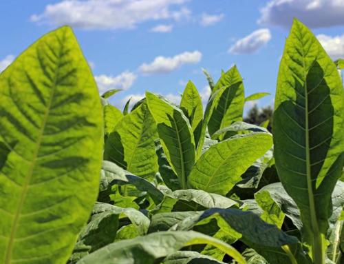 湖北烟草有机肥