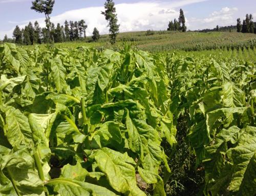 湖北瑞禾烟草有机肥厂家