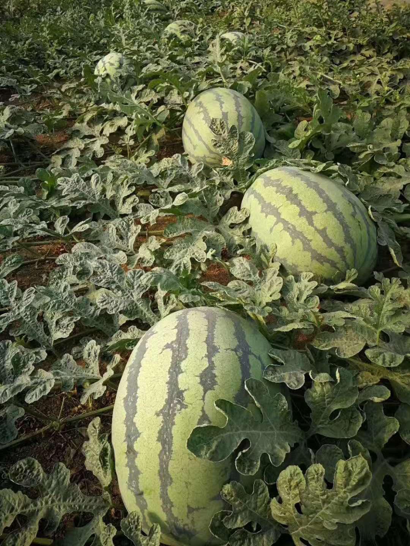 湖北瑞禾水果有机肥